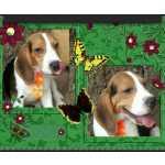 beagle desaparecido