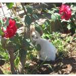 Ofereço gatinhos brancos
