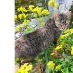 Gatinha jovem de horta para adoção