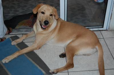 Procuro Namorada Labrador