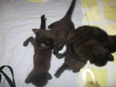 Dão se gatinhos