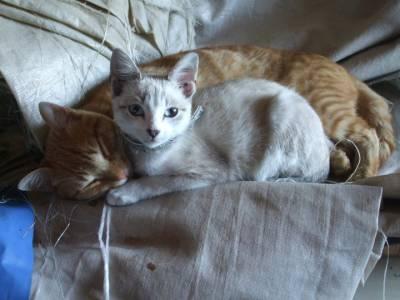 Ofereço gatinhos nascidos no fim de Agosto