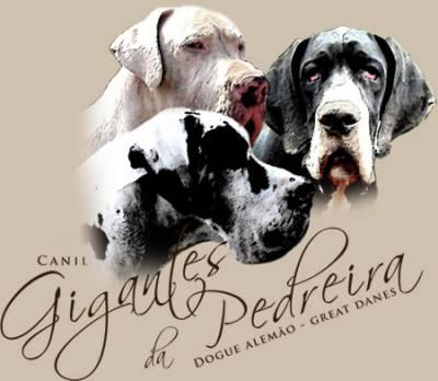 Canil Gigantes da Pedreira - Dogue Alemão