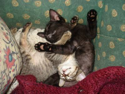 gatinhas lindas bebés para adopção conjunta