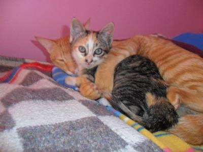 Dou dois gatos na zona do Porto  URGENTE