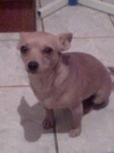 Me ajudem a encontrar minha cachorrinha