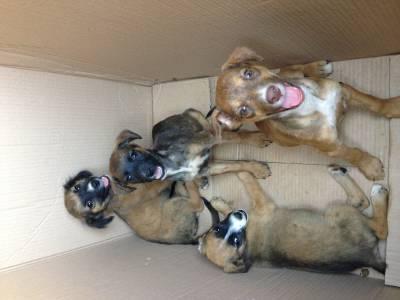 Cachorrinhas encontradas no algarve