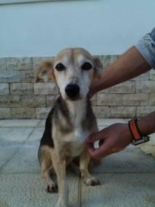 Cadela encontrada em São João do Estoril Cascais