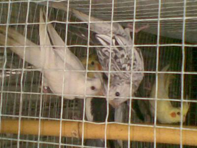 vendo várias aves de bico curvo