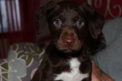 Cão bébé para adopção