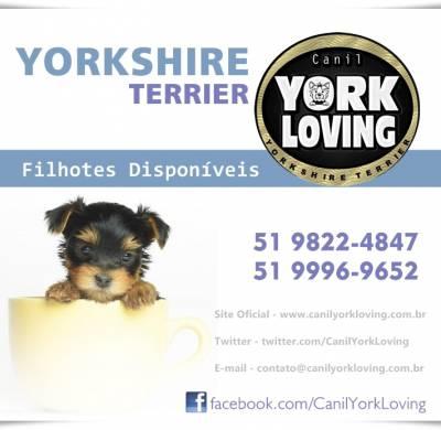 Yorkshire - Portal do Filhote RS