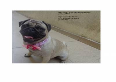 Pug Jade linda procura namorado carinhoso
