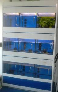 Bateria Expositor de peixes