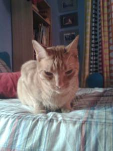 procuro gato amarelo tigrado olhos verdes