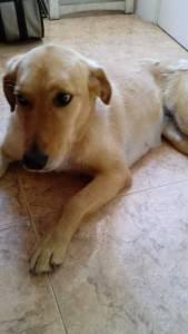 cadela desaparecida em lisboa