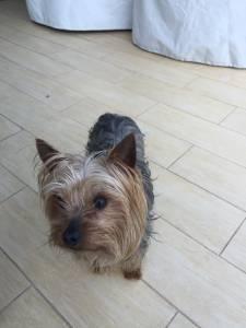 o meu cão desapareceu