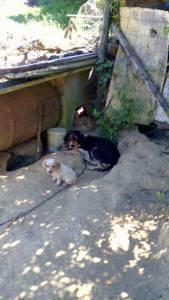Dou cão bebé