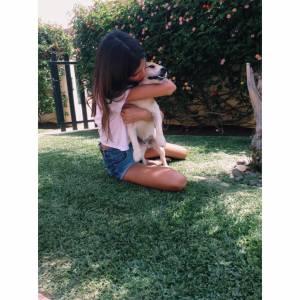 Jack Russell Terrier macho para acasalamento