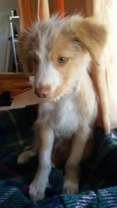 Encontrei cão bebé em Leiria