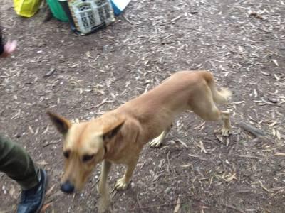 Cão meigo perdido em Sintra