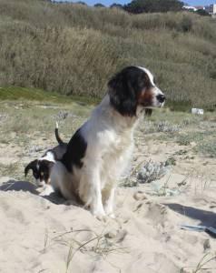 Perdi a minha cadela