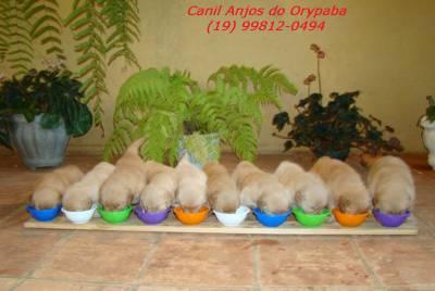 Canil Anjos do Orypaba - GOLDEN RETRIEVER