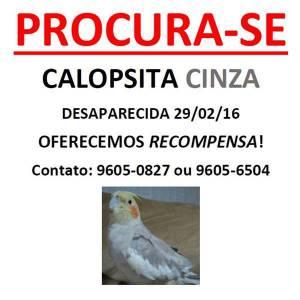 CALOPSITA PERDIDA