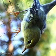 Redes Invisíveis Resistentes para todo os Pássaros