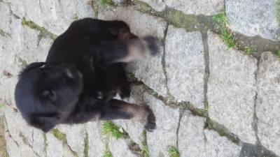 Cães para Dar