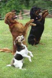 Adestrador Canino - Odediência  eComportamental