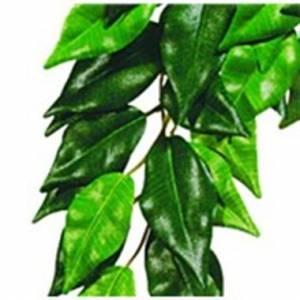 Decoração Para Terrários Planta Ficus Small Exo Te