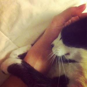 Gato perdido na Herdade da Aroeira
