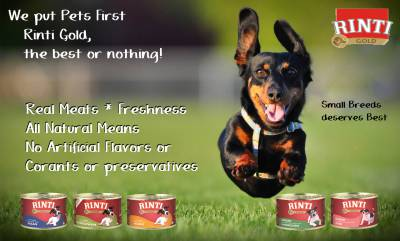 Alimentos húmidos e Secos para Cães e Gatos