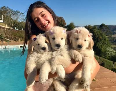 Adoráveis Filhotes De Golden Retriever