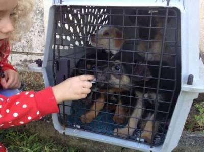 Cinquenta cães num canil