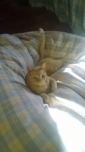 Gato desaparecido Vila-Chã Barreiro