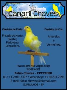 Canarios De Cor e Porte