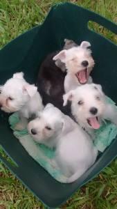 Tu perro kennel canil especializado raças pequenas