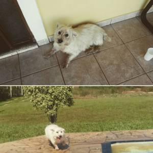 Meu cachorro sumiu em Porto Feliz