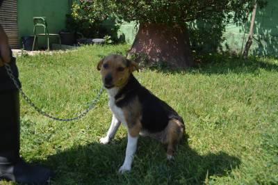 x de beagle