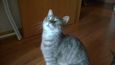 A gata encontrada