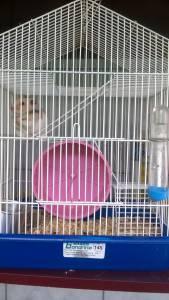Hamsters e Gaiolas