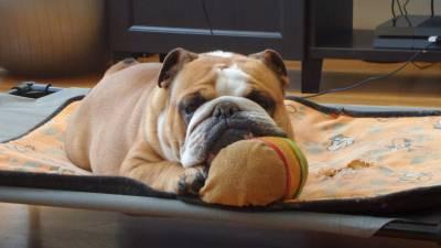 O Brad Pitt dos Bulldogs