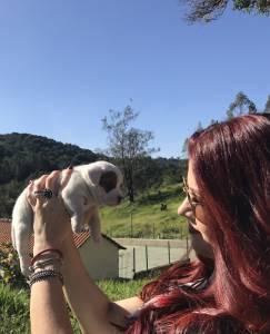 Filhotes de Jack Russell Terrier c pedigree e chip
