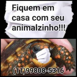 Mini tartaruga de terra