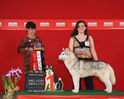 Husky Siberiano - Danielewicz kennel