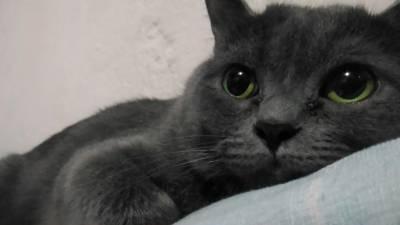 Eu quero cruzar meu Gato Macho