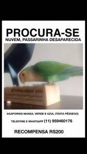 Agaporni perdida na Bela Vista São Paulo