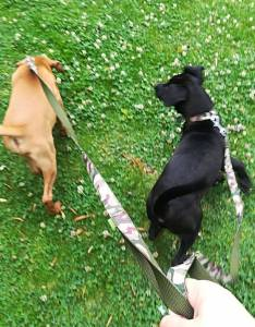 Cachorros para adoção URGENTE