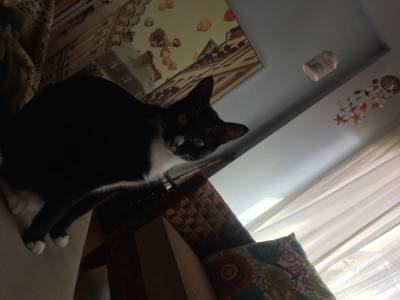 Procuro gato desaparecido Vila verde valbom